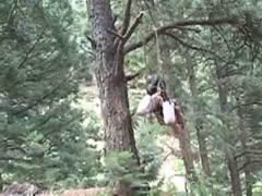 katherine lock hanging in a tree